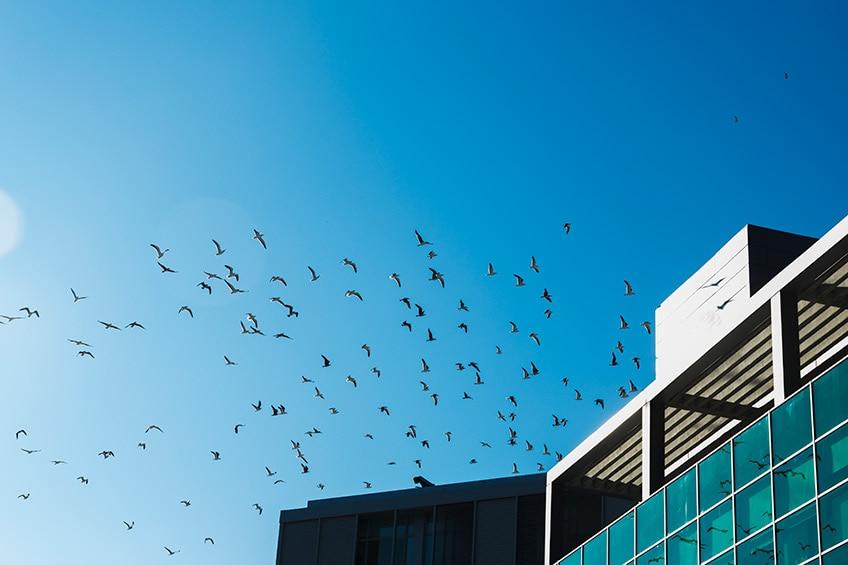 birds flying over a modern glass building